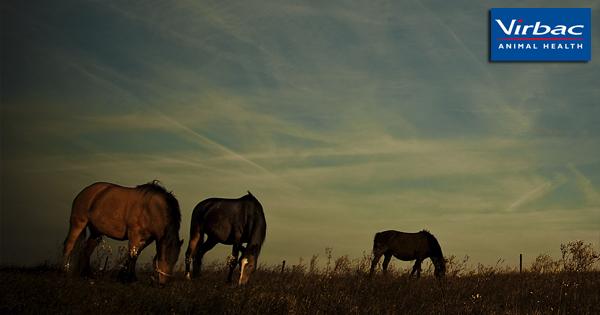galandféreg lovak