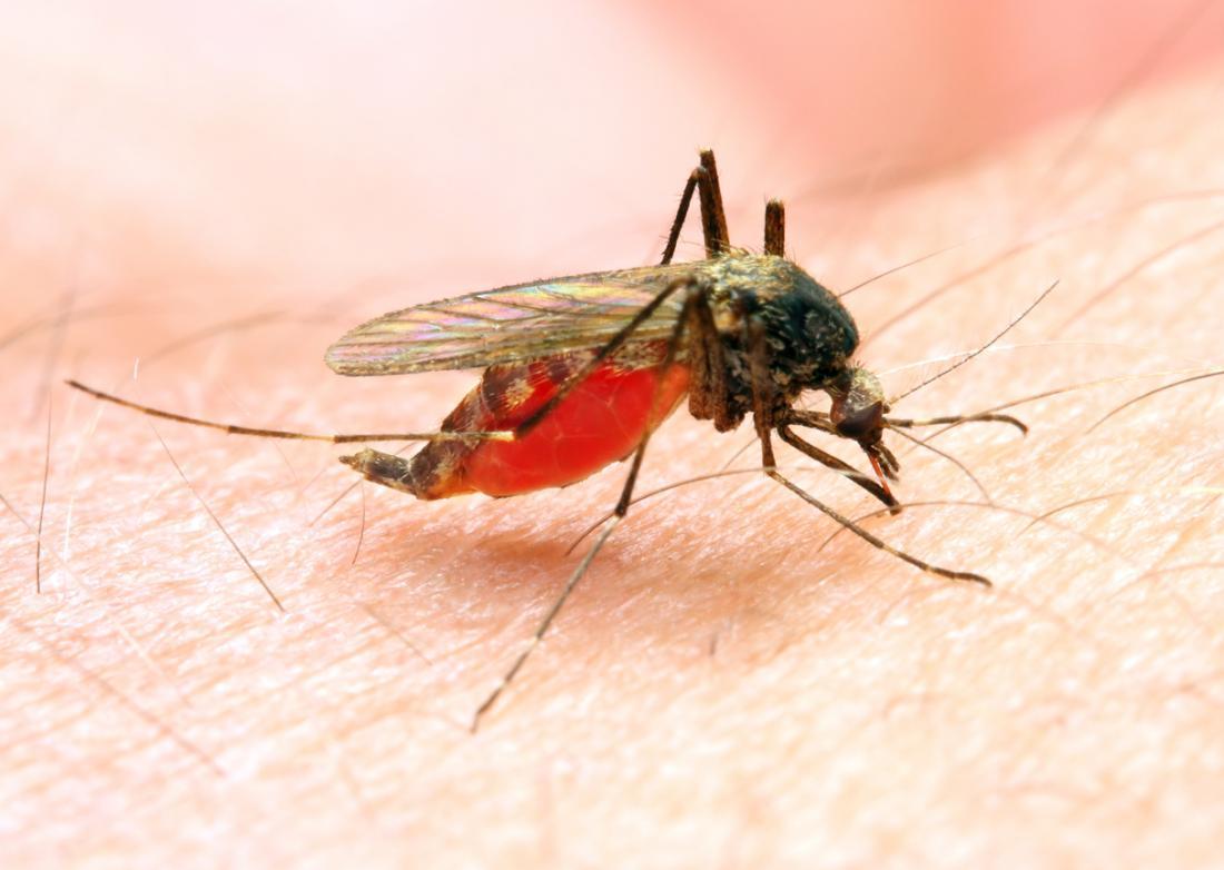 Szúnyogok által terjesztett betegségek