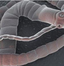 Paraziták, a férgek kivételével