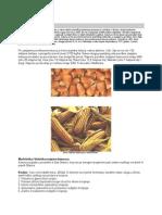 hymenolepidosis közbenső gazdaszervezet savas nyál és rossz lehelet