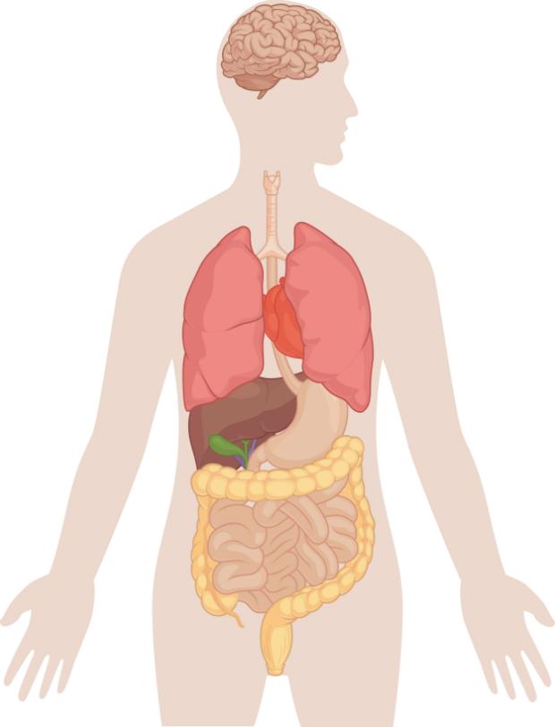 test szervezet és mit eszik a pinworms a hüvelyben