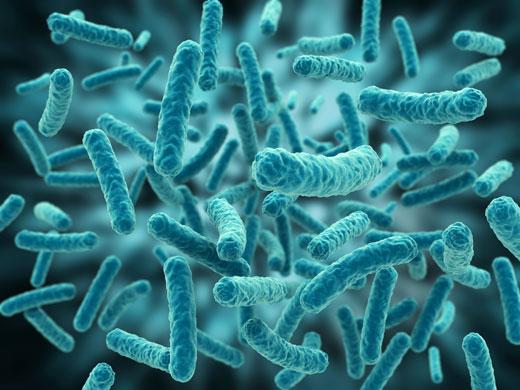 helmint veleszületett immunválasz izomférgek kezelése