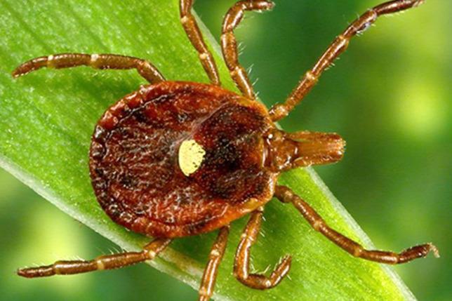 Bélférgesség tünetei és kezelése - HáziPatika - Karaganda paraziták kezelése