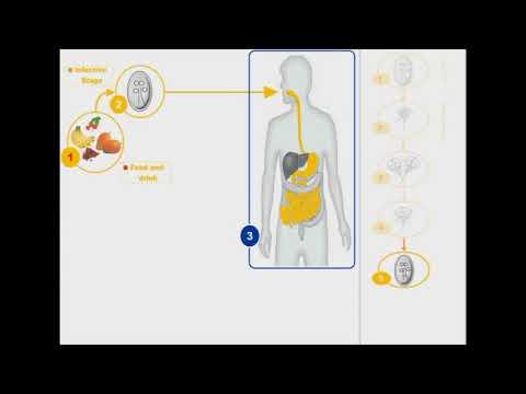 Giardiasis a torokban Giardiasis és ízületek