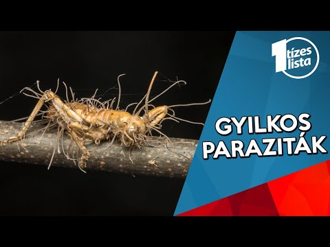 miért álmodnak a paraziták