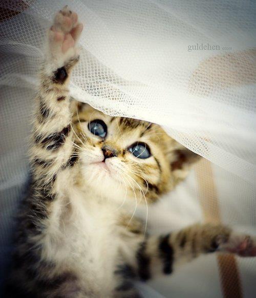 a macskabétát hívják