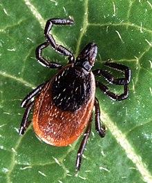 Vektor (járványtan) Paraziták és vektorok blogja