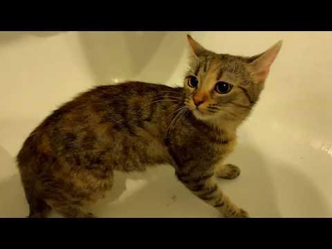 Hogyan lehet megszabadulni a férgektől a macskának