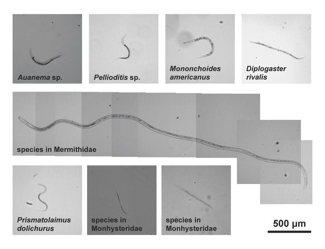 rák kezelés paraziták homeopátiás paraziták gyógyszerei