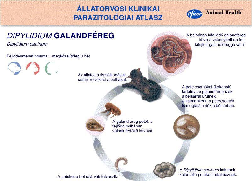 természetes paraziták megelőzésére szolgáló gyógyszerek babaférgek megelőzése