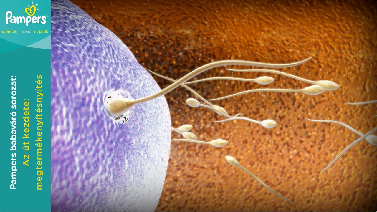 korbféreg járványtana