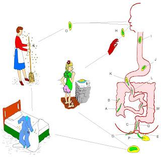 paraziták az emésztőrendszer kezelésében