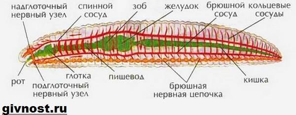 az enterobiasis gyógyszere mi