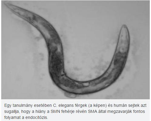 yógyszerek gyermekek férgek számára ágy paraziták hogyan lehet megszabadulni