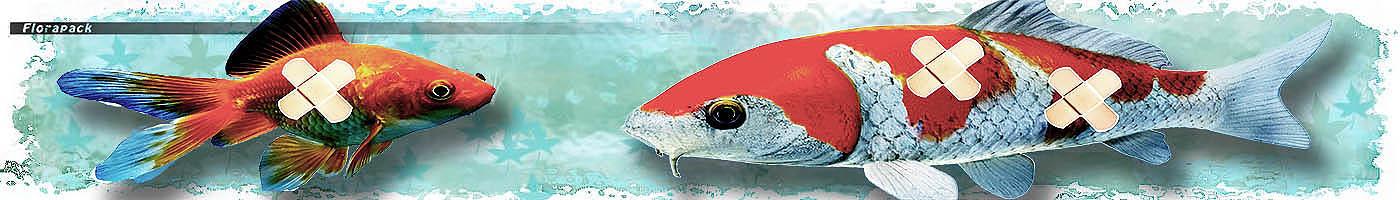 Halbetegségek VI. - Horgony- és kopoltyúféreg - horgász akvarista webáruház