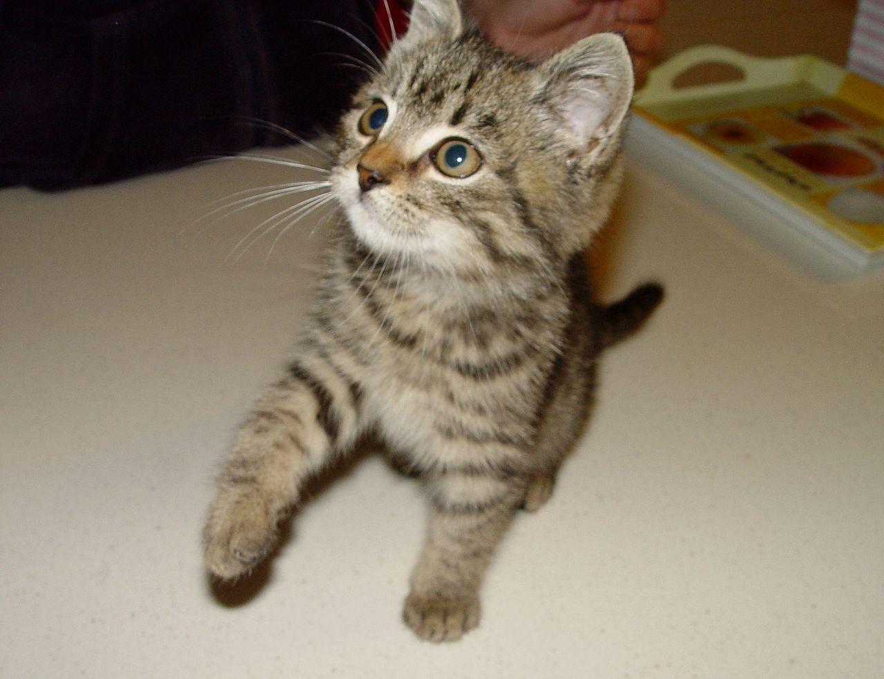 Hogyan lehet megszabadulni a férgektől a macskának. MACSKA BETEGSÉGEK