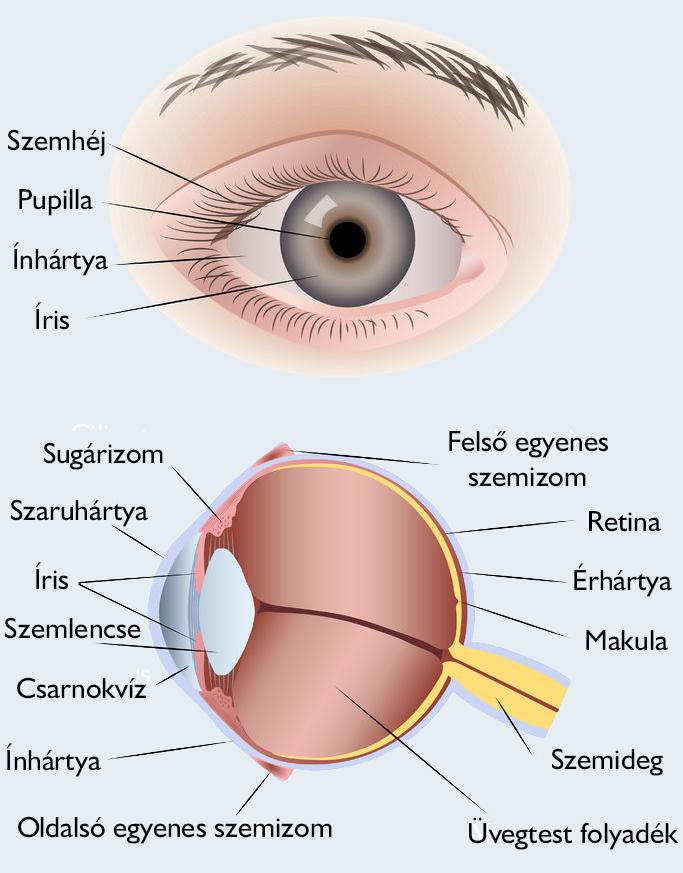 helminth a szem tünetei