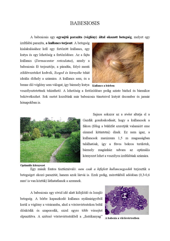 a férgek gyógynövényeinek keveréke