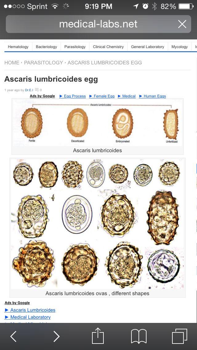 életképes helminth tojások széles scolex szalag