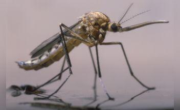 Mi is az a malária és hol kell tőle tartani?