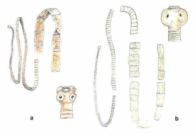 Emberi élősködők | Pannon Enciklopédia | Kézikönyvtár
