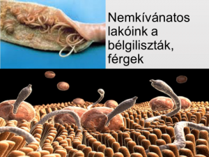 Parazita étkezési hal nyelv