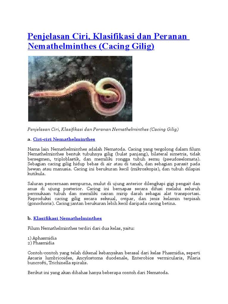 pinworm tojás rajz protozoai paraziták emberben