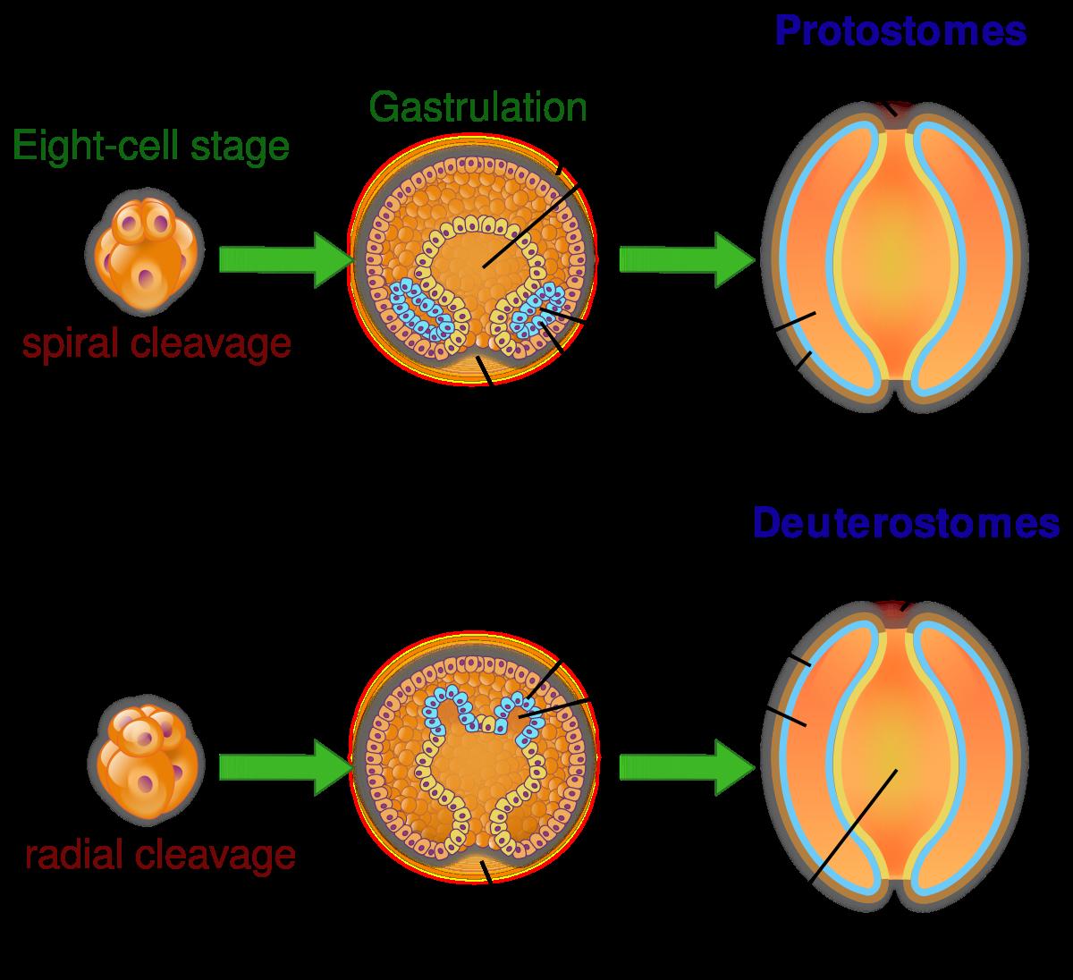szanatórium parazita kezelés