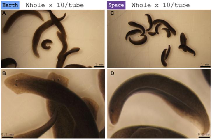 A székletben lévő férgek nem mozognak Helminthiasis, hogyan lehet azonosítani
