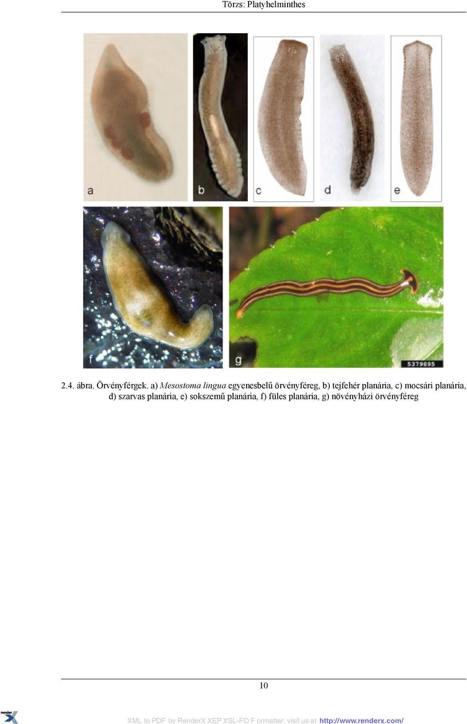 mi segít a férgeknek a férgekben a paraziták kezelésének egyik módja