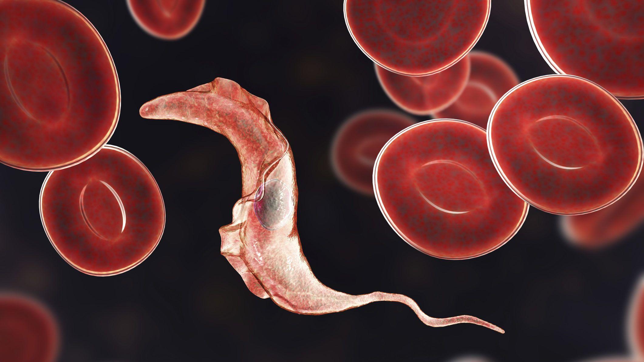 paraziták nem gyógyszer mik a férgek, hogyan lehet megszabadulni tőlük