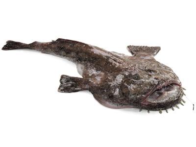 vannak férgek a halakban szem feregfertozes