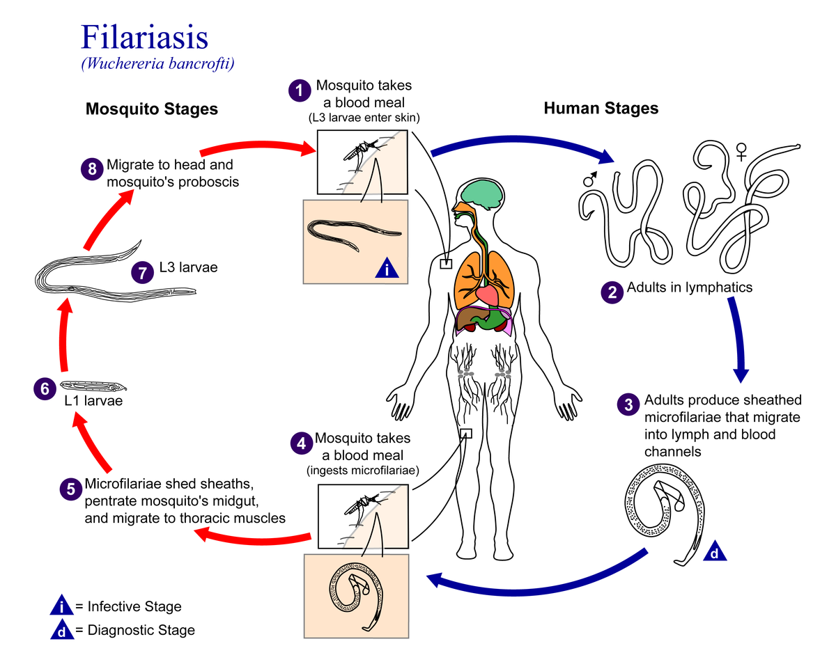 enterobiosis kezelési standard bél pattanások tüneti kezelése