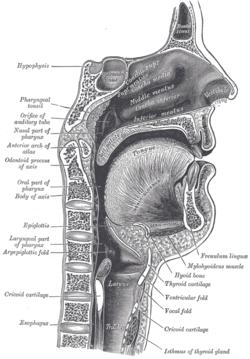 morgellons paraziták képeket húsevők trichocephalosis