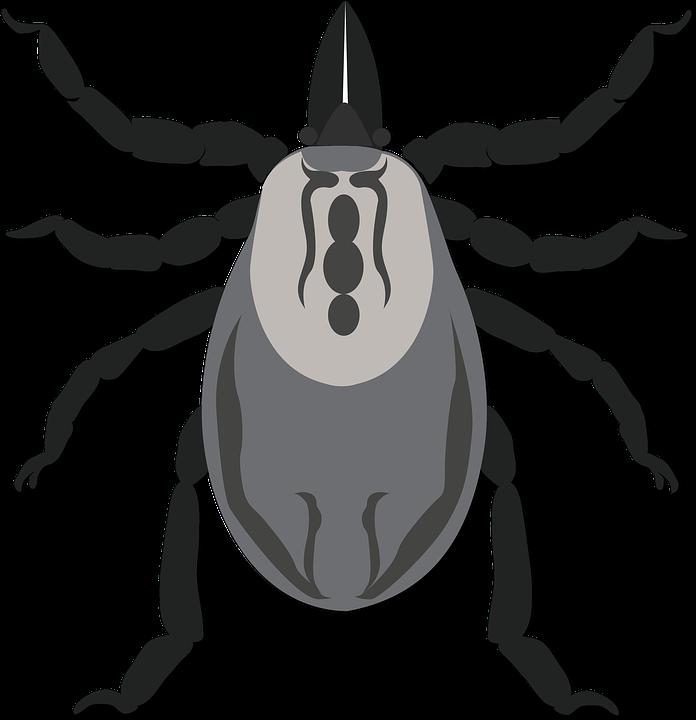 aszcariasis necatorosis anyag platyhelminthes ppt