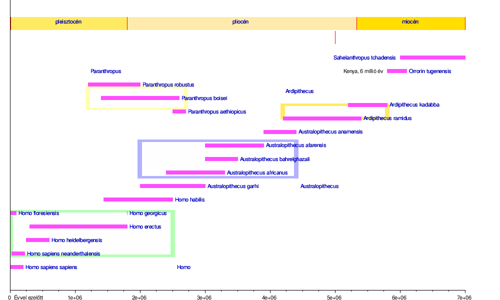 Fascioliasis patomorfológiája, cholangitis, Fascioliasis kurzus
