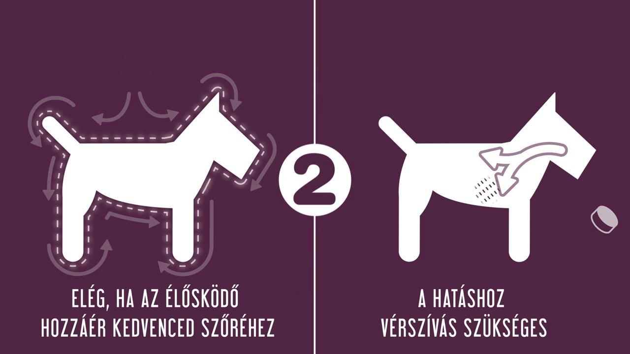 MóraMancs Állatorvosi Rendelő és Állatpatika
