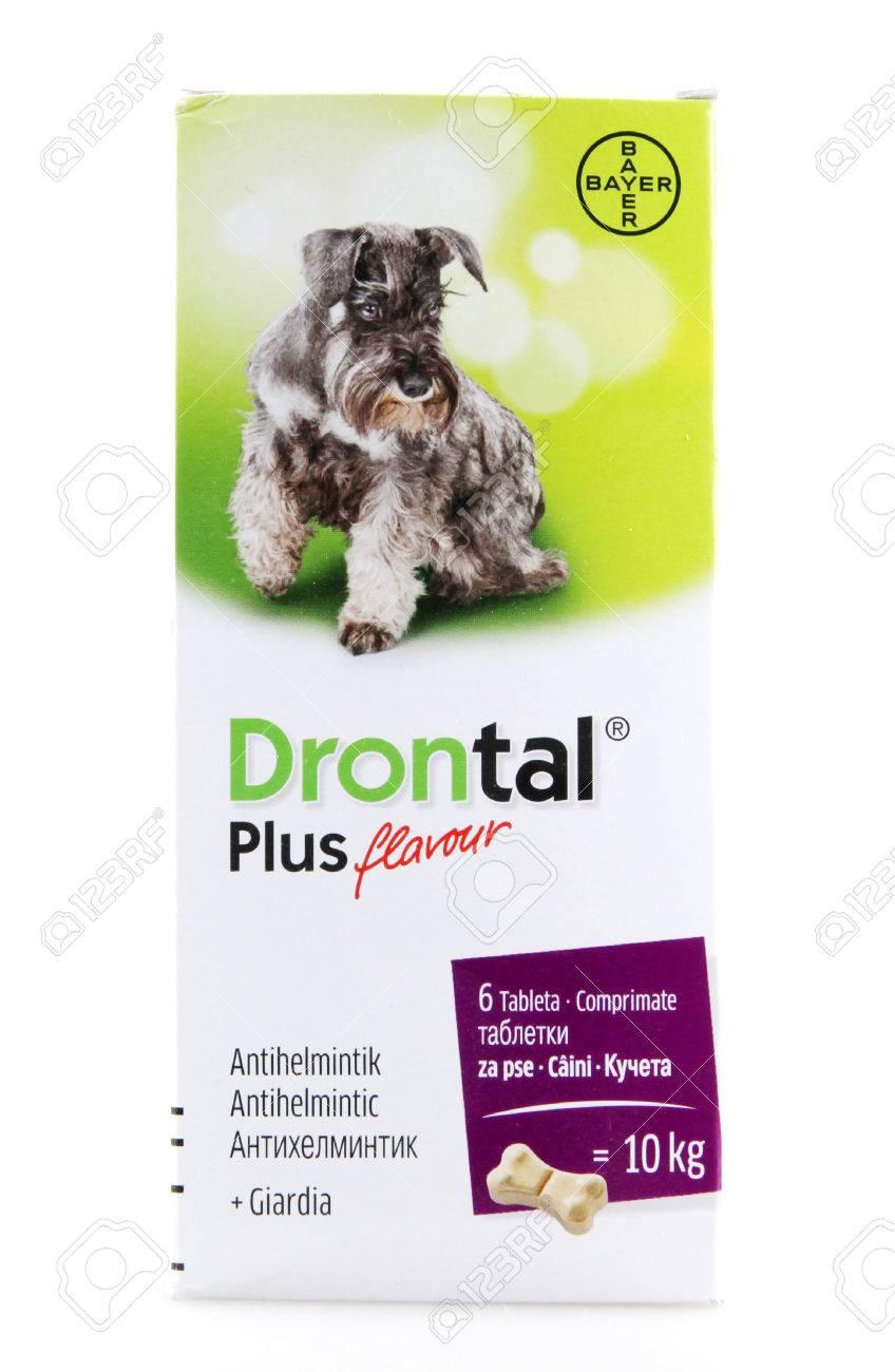 drontal plus para giardia