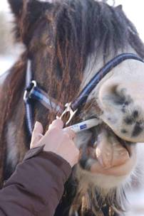 Féreghajtó gyógynövények lovaknak