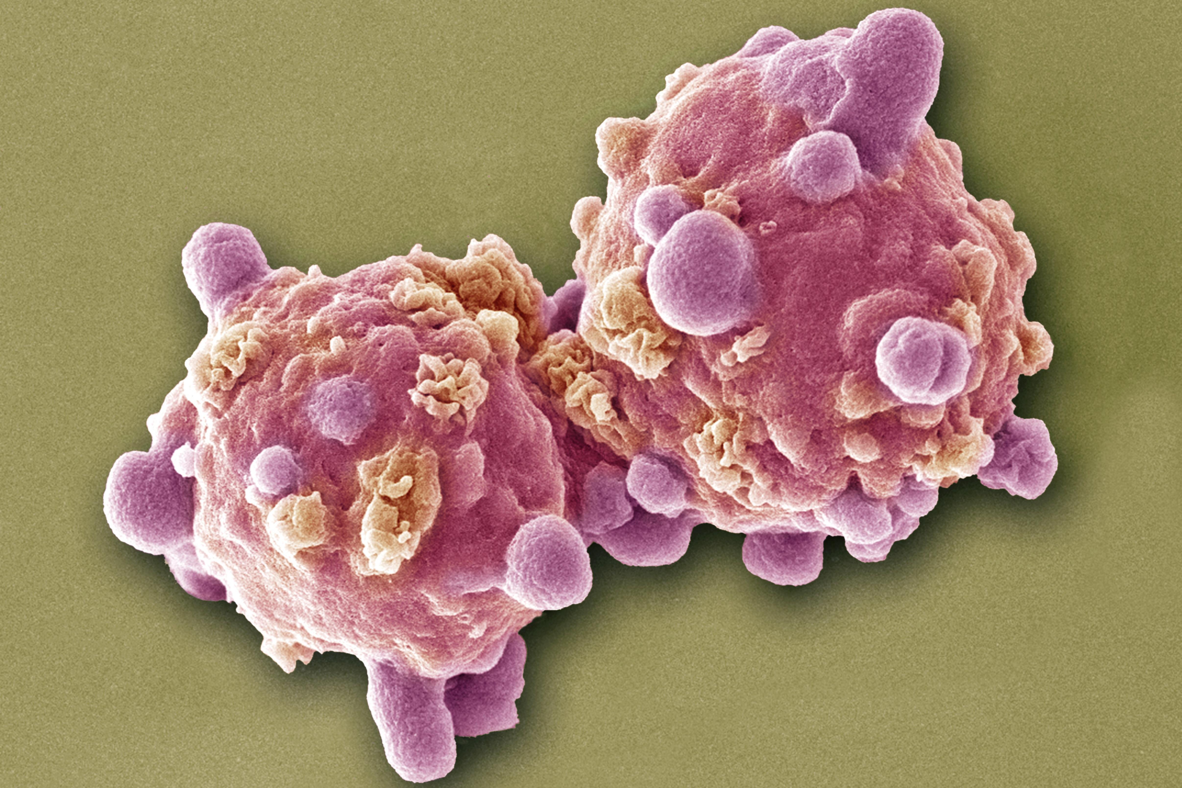 Intochicus parazita gyógyszeres kezelés