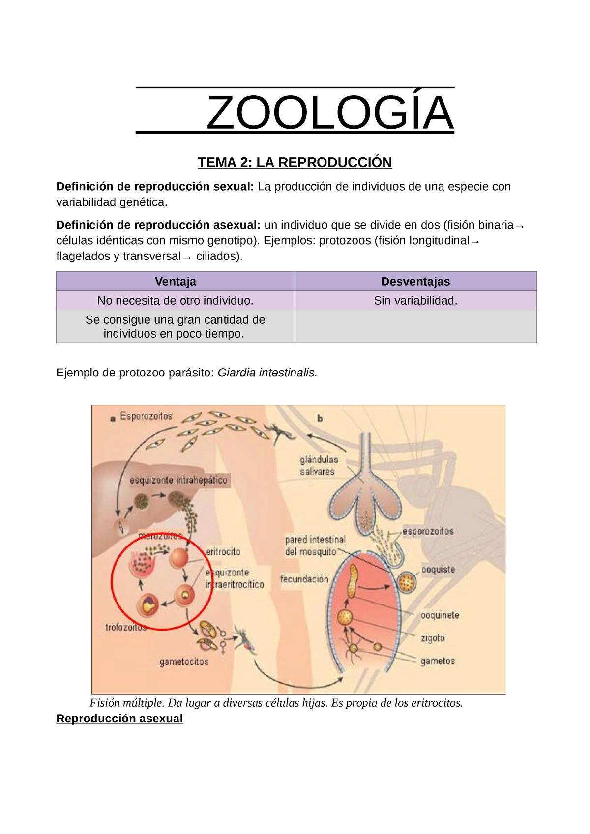 Bél-protozoa « science