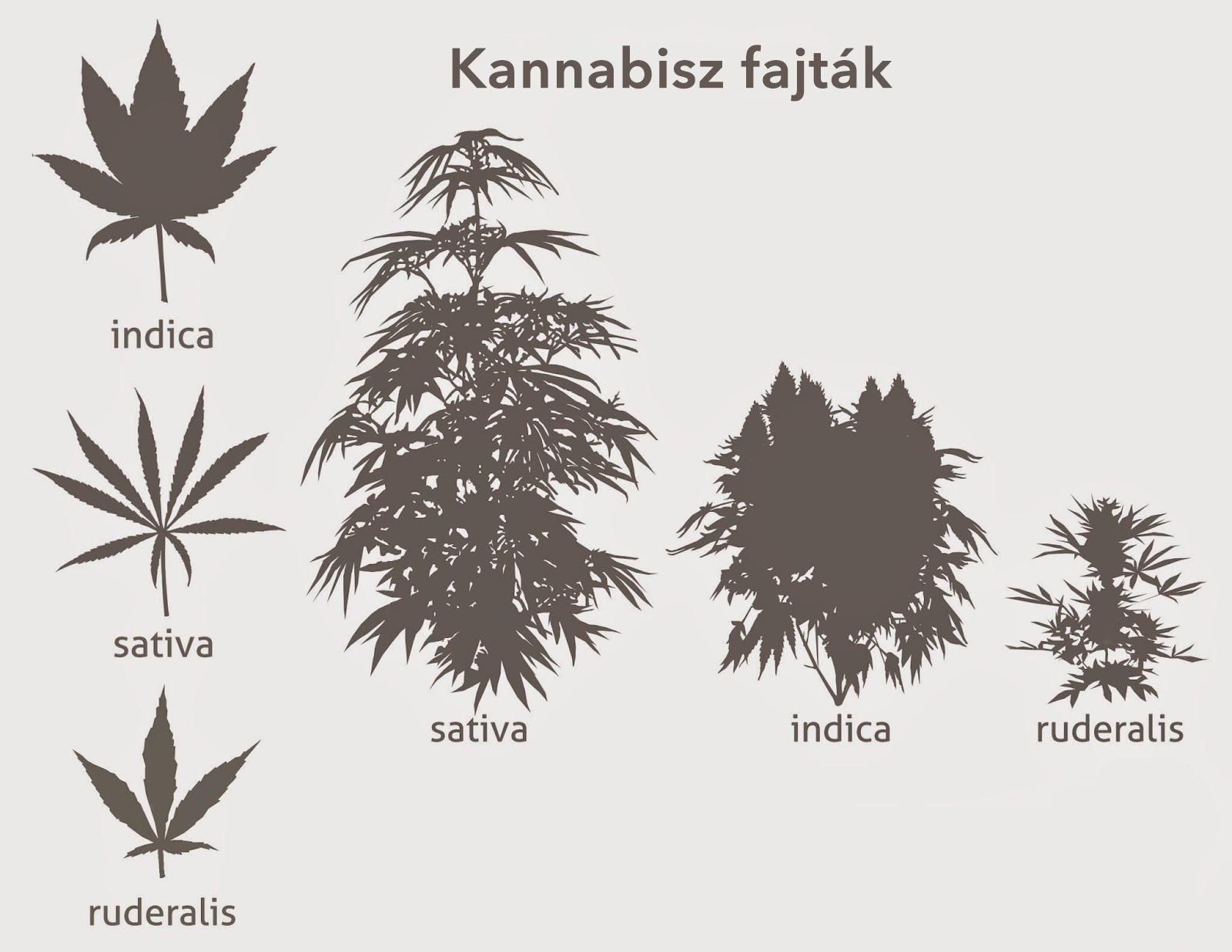 KENDERPATIKA – természet egészsége