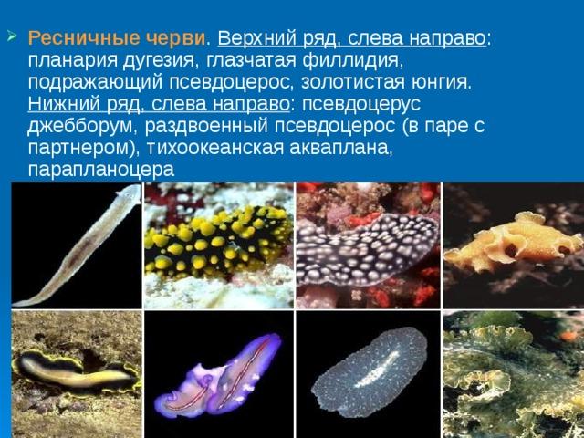 Mit lehet tenni paraziták ellen? Hogyan vehetjük észre és pusztíthatjuk ki?