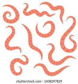 Pinworm jelek