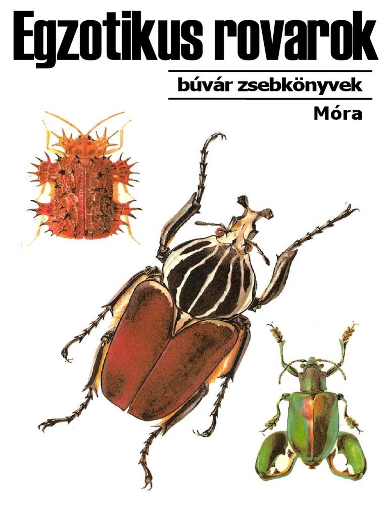 Szúnyogok mikrosporid parazitái Férgek, hogyan lehet megszabadulni a viszketéstől