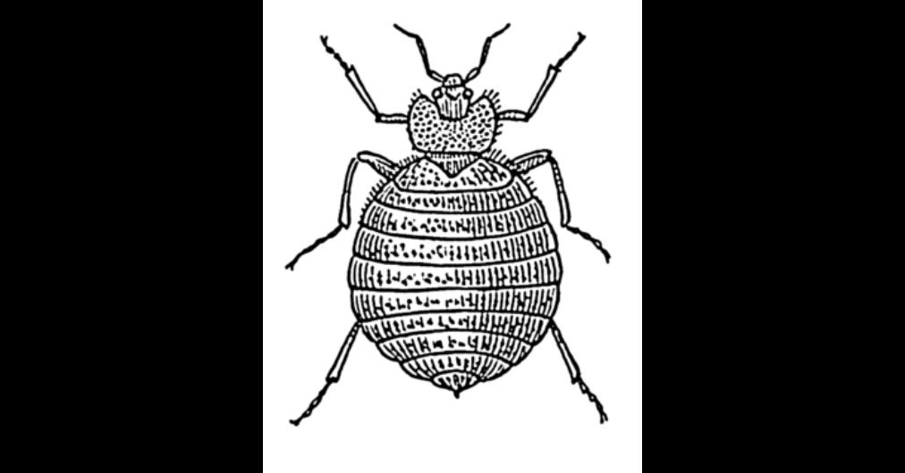 paraziták, amelyek miatt a rossz lehelet hogyan kell tenyészteni a fáklyát