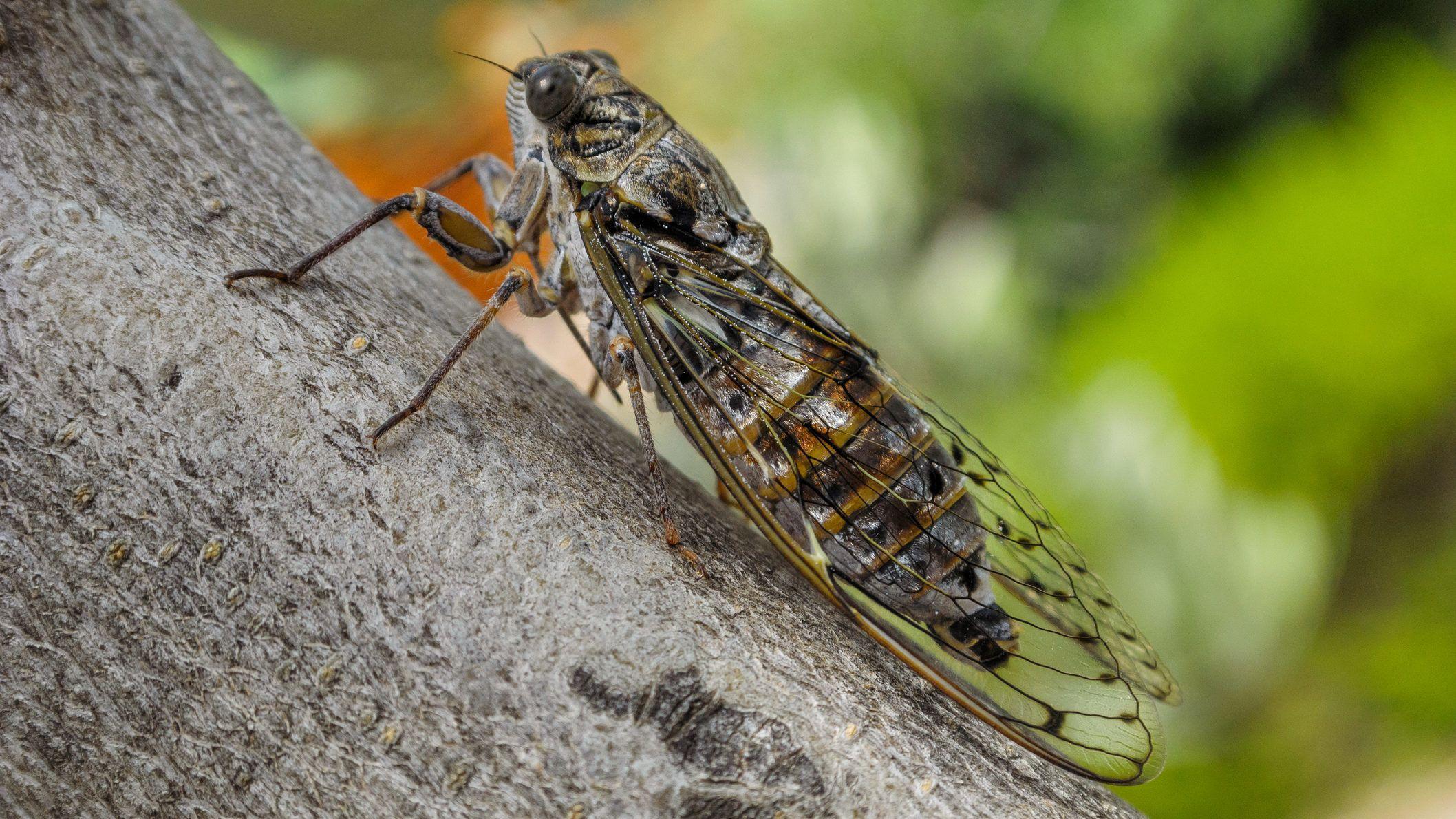 Sokkal durvábban teszi zombivá a hangyákat a parazita gomba, mint ahogy eddig sejtettük