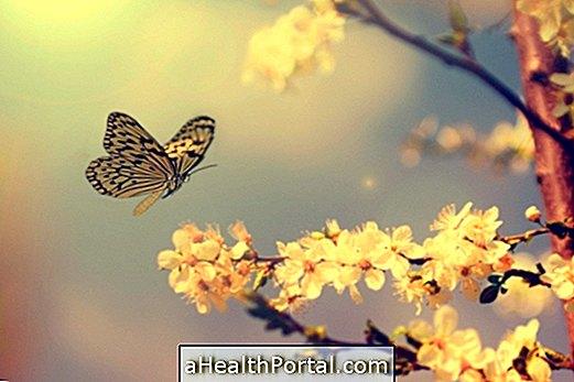 Miért van néhány Monarch pillangók Crumpled Wings?