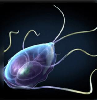 erős betegség a bélben élő paraziták számára
