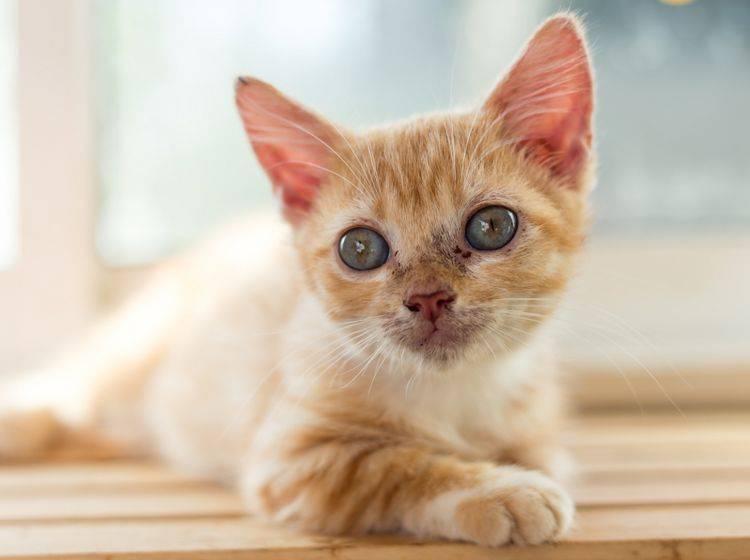 giardien bei katzen behandeln